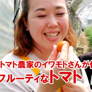 トマト栽培でトマトの育て方