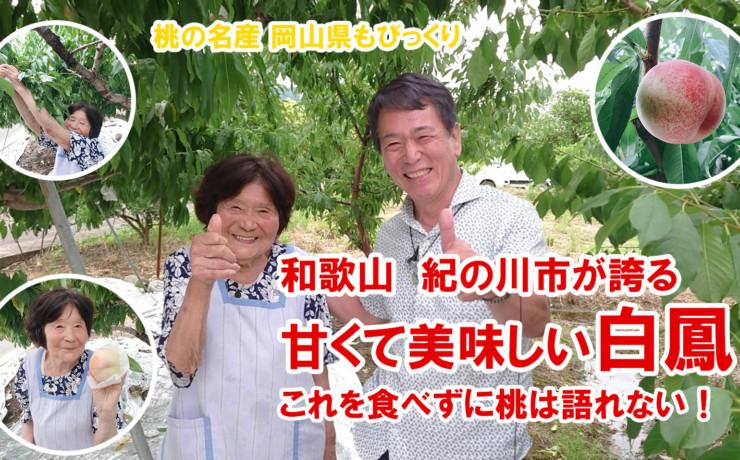 桃の美味しい和歌山で採れた紀の川市が誇る白鳳 美味しい桃の育て方 エネメイクの医食同源